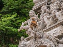 Netter Affe, der eine Kokosnuss in Batu-Höhlen, Malaysia hält Stockfotografie