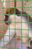 Netter Affe, der im Käfig auf Bauernhof sitzt Lizenzfreies Stockbild