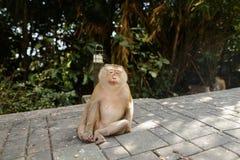 Netter Affe, der im Park, Bäume im Hintergrund sitzt Lizenzfreies Stockbild