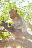 Netter Affe im Naturgarten Stockfotos