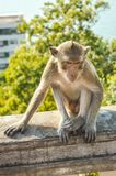Netter Affe im Naturgarten Stockfotografie
