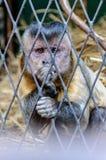 Netter Affe im Zoo Stockfoto
