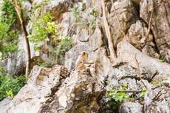 Netter Affe lebt in einem Naturwald von Thailand Stockfotos
