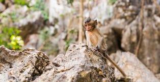 Netter Affe lebt in einem Naturwald von Thailand Stockbilder