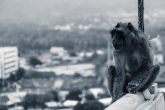 Netter Affe sitzt auf dem Grenzzaun des Tempels mit Lizenzfreies Stockbild