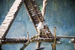 Netter Affe am Zoo Stockfotos