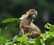 Netter Baby-Affe lizenzfreie stockfotos