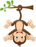 Netter Babyaffe, der am Baum hängt Lizenzfreies Stockfoto