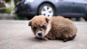 Netter Babyhund, der auf dem Boden vor Auto liegt und neugierig, konzentriert auf seine Augen, 4K Film, Zeitlupe schaut stock footage