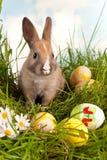 Osterhase mit Eiern Lizenzfreie Stockbilder