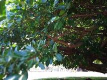 Netter Baum Stockfoto
