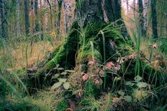 Netter Baum Lizenzfreies Stockbild