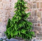 Netter Baum mit grünen Blättern und belaubt Rot mit wei?er Verbindung stockbilder