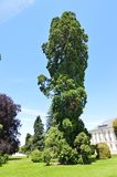 Netter belaubter Baum am Palast-Eingang in den Gärten des Bauernhofes Art History Biology stockfotos