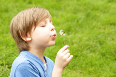 Netter blonder Junge, der auf Gras und weglöwenzahn der Schläge sitzt Lizenzfreie Stockfotografie