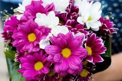 Netter Blumenstrauß von weißen und purpurroten Blumen in der Frauenhand lizenzfreie stockbilder