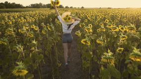 Netter Brunette in einem blühenden Sonnenblumenfeld stock video footage
