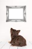 Netter Chihuahuahund gesehen am hinteren Anstarren an einem leeren Bilderrahmen Lizenzfreies Stockbild