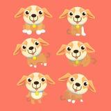 Netter Chihuahuasatz in den verschiedenen Haltungen Lizenzfreie Stockfotografie