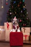 Netter chinesischer Hund mit Haube sitzt nahe dem Weihnachtsbaum Neues Jahr ` s Geschenke Heimtiere stockfotos