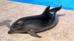 Netter Delphin im dolphinarium reisen stockfotografie