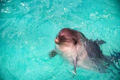 Netter Delphin im Pool im dolphinarium stockbilder