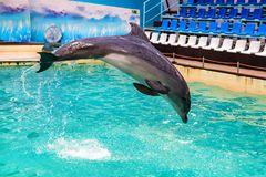Netter Delphin springt in Pool im dolphinarium stockfotos
