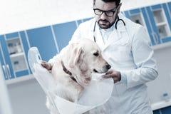 Netter ernster Tierarzt, der einen e-Kragen hält Stockfoto