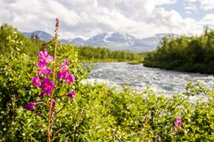 Netter Fluss für das Flößen! Lizenzfreie Stockbilder