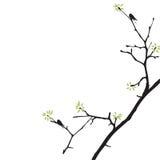 Netter Frühlingsbaum mit Vögeln Stockbild