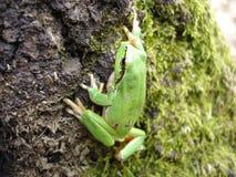 Netter Frosch Stockbild