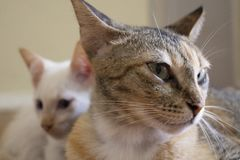 Netter Gesichtsausdruck Mutterkatze mit Kätzchen Lizenzfreie Stockbilder
