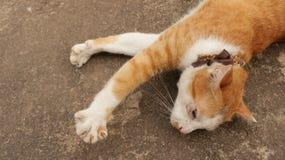 Netter Ginger Cat Sleeping mit den Tatzen in der Luft stockfotografie