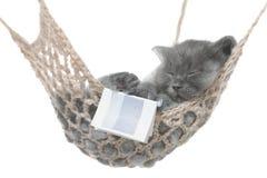 Netter grauer Kätzchenschlaf in der Hängematte mit offenem Buch. Stockfoto