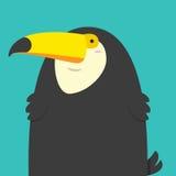 Netter großer fetter Tukanvogel Stockfotos