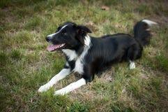 Netter großer Hund, der auf dem Boden mit der Zunge heraus hängt während des heißen Sommertages liegt lizenzfreie stockfotos