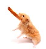 netter Hamster mit Brot Stockfotografie