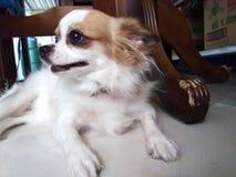 So netter Hund lizenzfreies stockbild