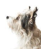 Netter Hund stockbilder