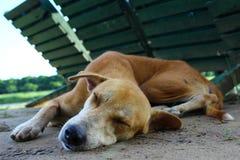 Netter Hund Lizenzfreie Stockfotografie