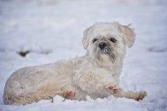 Netter Hund auf dem Schnee lizenzfreies stockbild