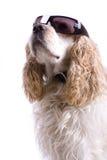 Netter Hund auf einem weißen Hintergrund Lizenzfreie Stockbilder