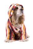Netter Hund auf einem weißen Hintergrund Lizenzfreie Stockfotografie