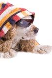 Netter Hund auf einem weißen Hintergrund Lizenzfreie Stockfotos