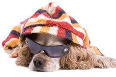 Netter Hund auf einem weißen Hintergrund Lizenzfreies Stockfoto