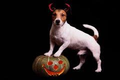 Netter Hund in den Teufeln kostümieren Stellung auf Halloween-Kürbis Lizenzfreies Stockfoto