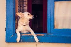Netter Hund, der außerhalb des Fensters an einem sonnigen Tag schaut lizenzfreie stockbilder