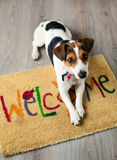 Netter Hund, der auf dem Teppich aufwirft stockbild