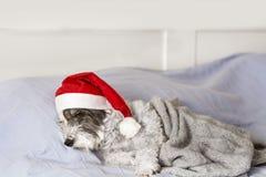 Netter Hund, der auf einem menschlichen Bett mit Weihnachtshut schläft Lizenzfreie Stockfotografie