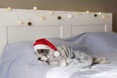 Netter Hund, der auf einem menschlichen Bett mit Weihnachtshut schläft Lizenzfreies Stockbild